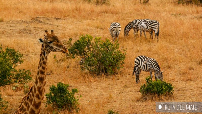 Animales hacer un safari P1130939