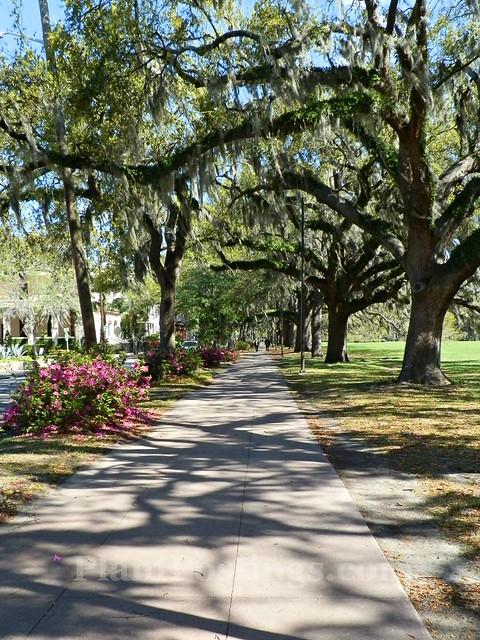 forsyth park walkway 3