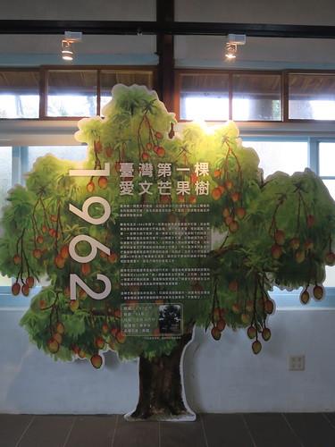 20180915-芒果樹介紹 拷貝