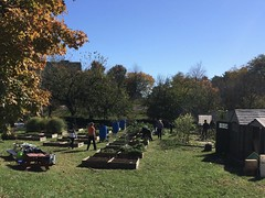 Bluejay's Perch JHU Community Garden