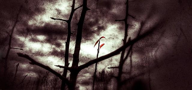 December 4 - A sliver of hope