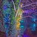Kew Gardens WINTER Lights