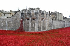 Tower of London Poppies on Armistice Day
