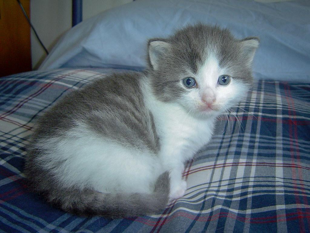 Fotos de animales de todo tipo incluyendo mascotas que más te gustan - Página 13 44498258320_b6188d5cef_b