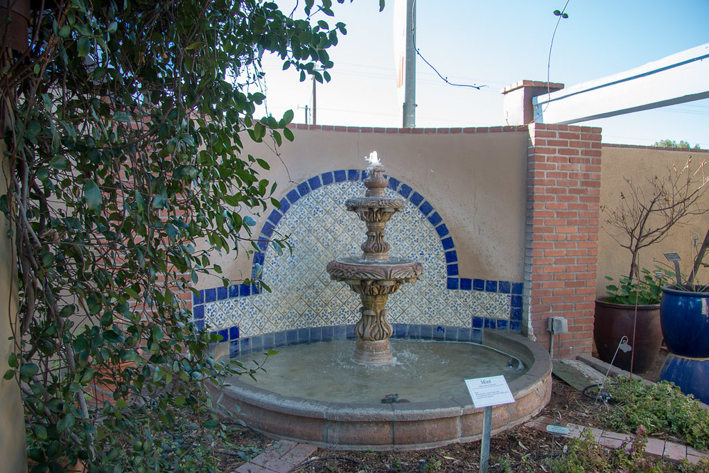 Mint and fountain display at Tucson Botanical gardens