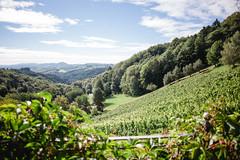 Aussicht Weingut Kranachberg