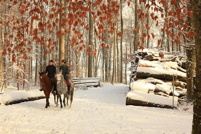 Horses, Canon EOS 5D MARK II, Canon EF 50mm f/1.8 STM
