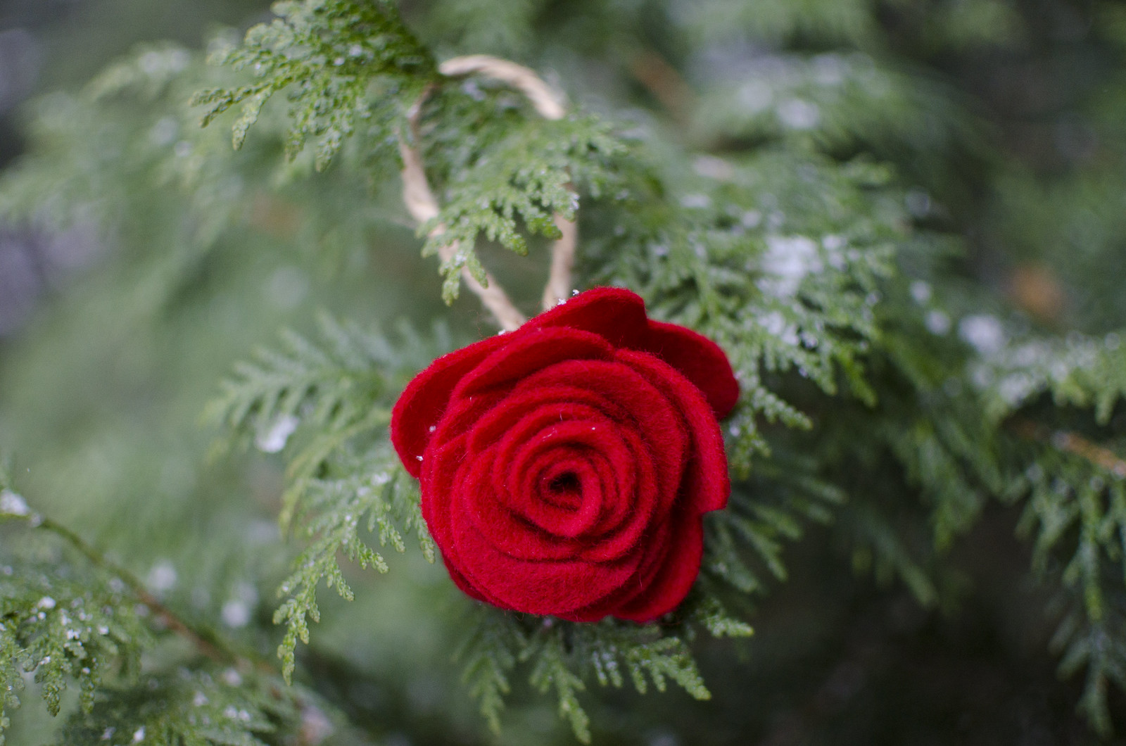 rose ornament 1