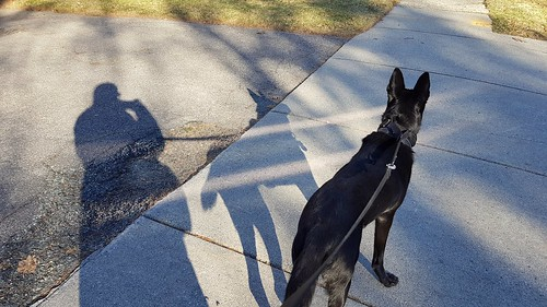 Dog walk shadows