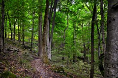 Let Us Walk Amongst the Tree and Explore the Wildness of Nature! (Mammoth Cave National Park)