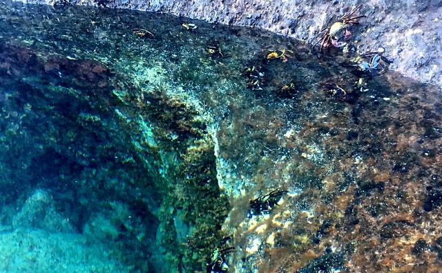Lord Howe Island : Herring Pools