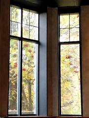 Autumn through the window