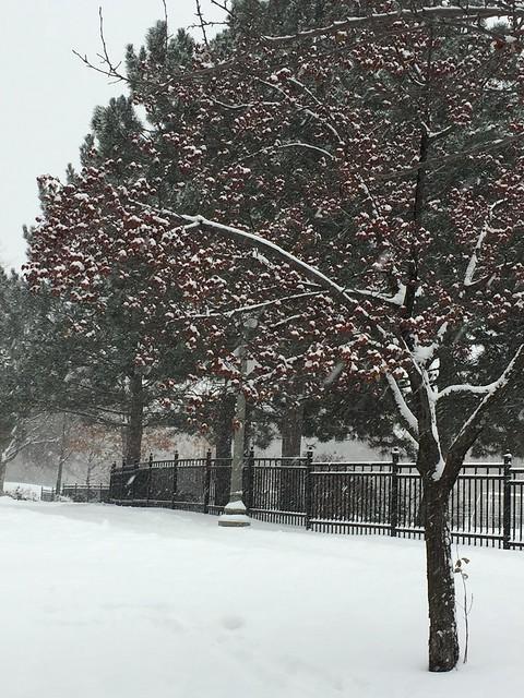 Winter Pompoms