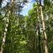 Notton Wood Nature Reserve (148)