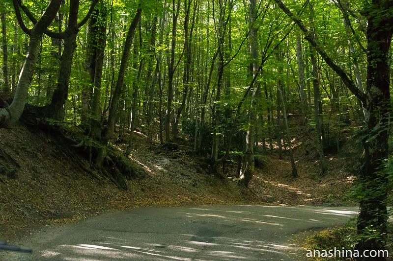 Лиственный лес, Ай-Петри, Крым