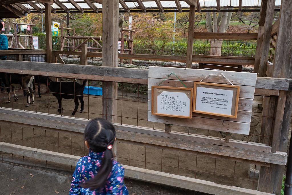 hachiouji_yuyakekoyake-35