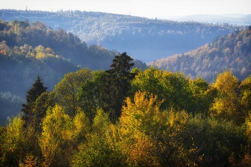 Regard sur le Parc Naturel Régional des Vosges du Nord