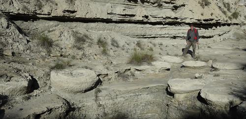 Megasismitas en depósitos lacustres - Rambla de los Pilares, Castilléjar (Granada, España) - 11