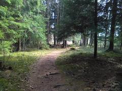 Gjennom Løkenskogen, Askim, Østfold, Norway