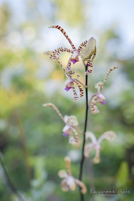 Orchid e de Hiengh, Nikon D750, AF-S Nikkor 50mm f/1.4G