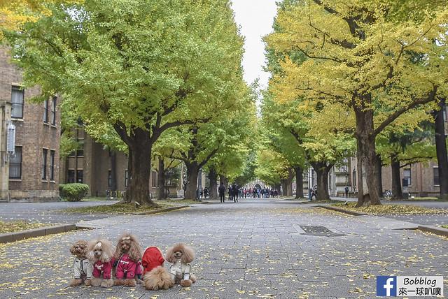 東京大學銀杏-31