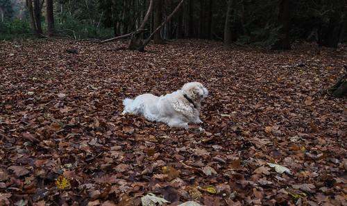 Dog Saturday.Buster.Explored.