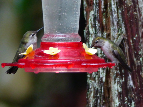 Feeding in the rain - Explore #271, 11.28.18.