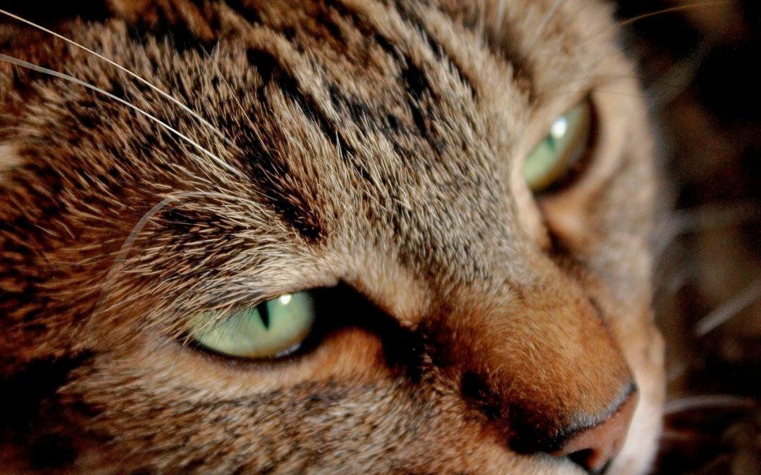 Взгляд у кошек фото