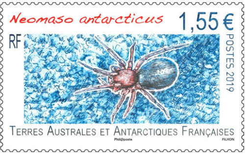 French Southern and Antarctic Lands - Insects: Neomaso Antarcticus (January 2, 2019)