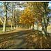 Tyne Green, Hexham Northumberland.
