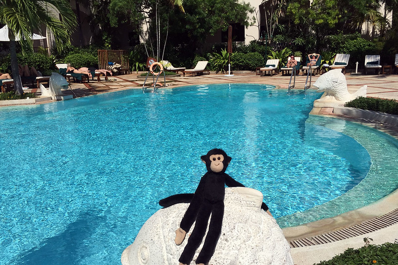 Monkey at hotel pool