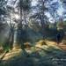 Paseando por el bosque by Fco. Javier García
