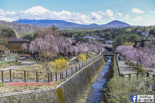 西湖療癒之鄉根場櫻花-26