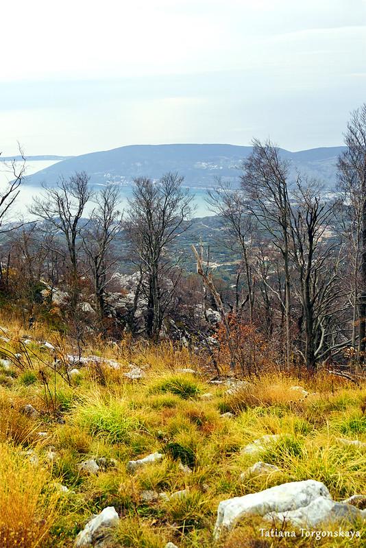 Пейзаж с лесом на горном склоне