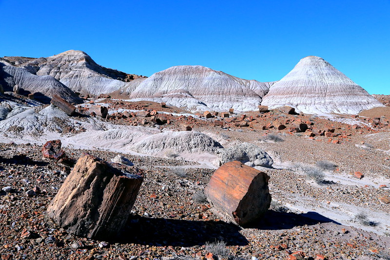 IMG_4233 Petrified  Wood and Badlands, Petrified Forest National Park