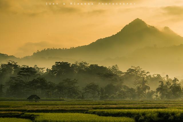 Suatu pagi di selorejo, Canon EOS REBEL T3, Canon EF-S 18-55mm f/3.5-5.6 IS II