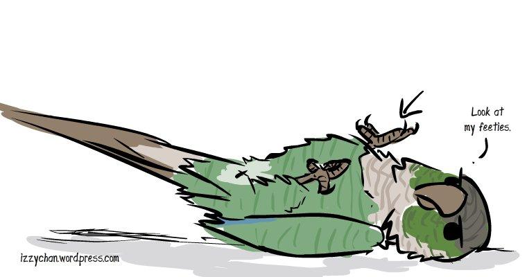 green cheeked conure bird feet