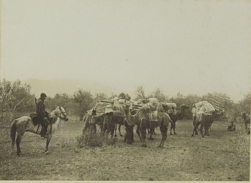 11. Верблюды каравана, 14 июня