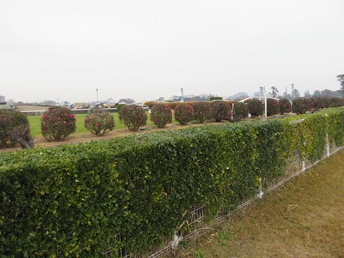 中山競馬場の竹柵障害観戦スポット