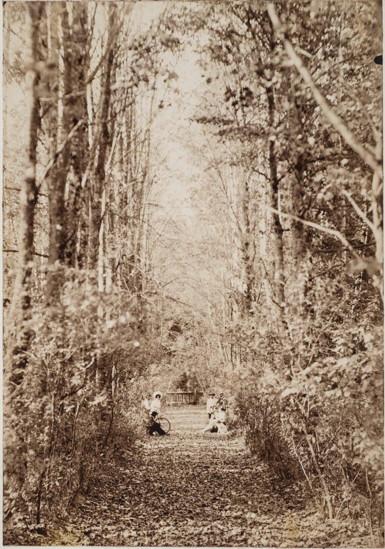 1900-е. Парк. Дом