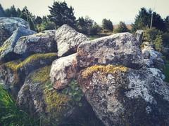 Stone wall  #WalkingConnemara
