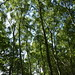 Notton Wood Nature Reserve (61)