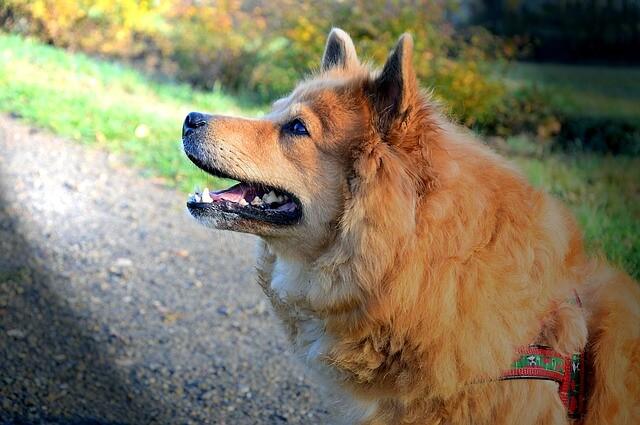 フィラリア予防を正しく行っている犬