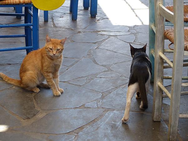 deux chats à Égine