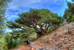 Shouf Biosphere Cedar Reserve