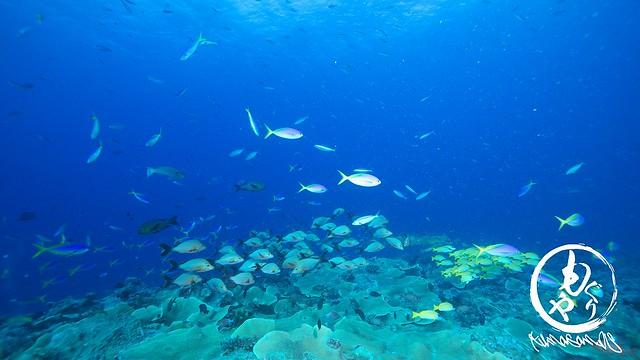 サンゴの上には魚がぐっちゃり