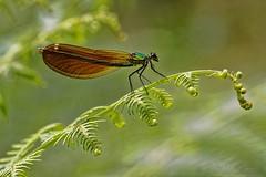 Celestial Creature - Créature Céleste - Photo of Sabadel-Latronquière