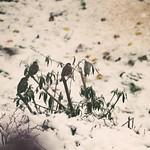 Blick aus dem Fenster in den Winter Vogel Garten - 21. Januar 2019 - Tarbek - Schleswig-Holstein - Deutschland