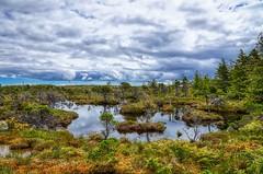 Haidagwai Swamp