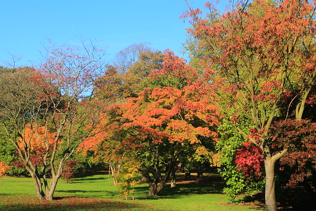 Acer Colours, Canon EOS M, Canon EF-M 18-55mm f/3.5-5.6 IS STM